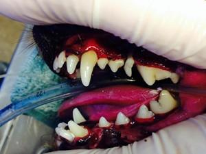 After-dog-teeth