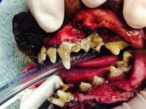 Before-dog-teeth